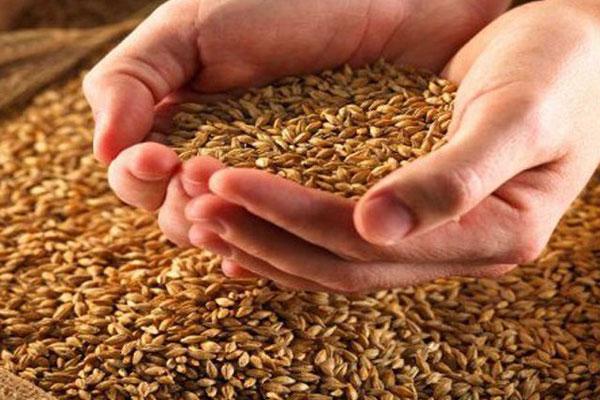 Прошлогоднее зерно никому не нужно?