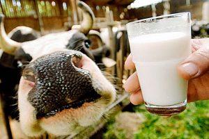 Молочные доходы