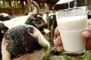 Субсидирование молока завершено
