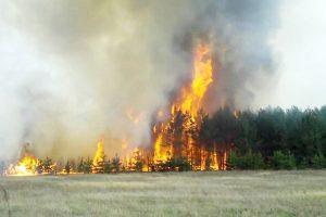 Задача — не пустить пожар в лес