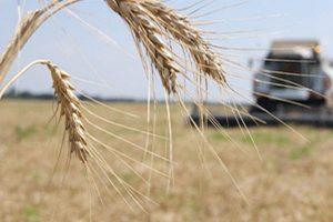 30 районов приступили к уборке урожая