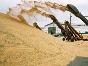 На развитие сельского хозяйства в регионе дополнительно планируется выделить 151,6 млн рублей