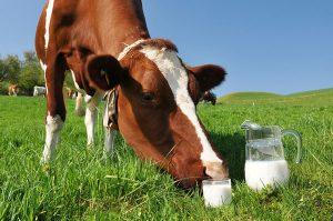 Как поднять цену на молоко?