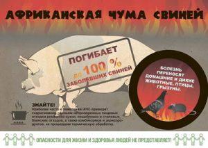 С 9 ноября 2018 года изменен статус Омской области по африканской чуме свиней с неблагополучного на благополучный