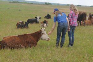 От фермы до пасеки
