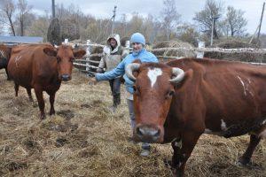 Вячеслав и Галина Кутышевы: выбираем фермерский путь