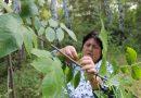 Лидия Викторовна Пушкарева, главный лесничий, начальник отдела «Саргатское лесничество»: «Пусть каждый из нас скажет спасибо лесникам»